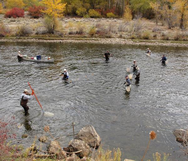 January 9th unveiling of 2012 status of south fork boise for Fly fishing boise idaho